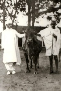 gandhi-and-malaviya-with-a-cow